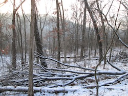 winter woods snow