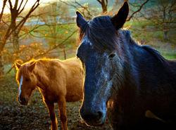 Fantasy horses battle