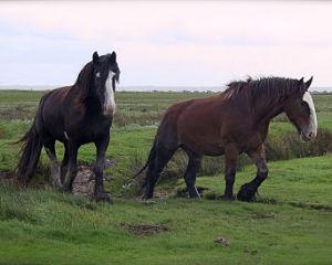 Breaking fantasy horses