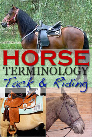 horse terminology tack riding
