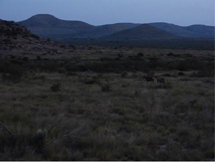mule deer in wilderness