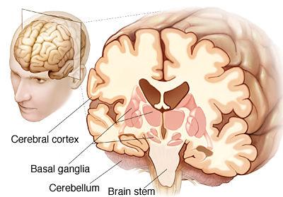 Brain muscle movement