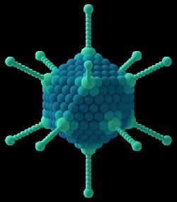 adenovirus nanotech
