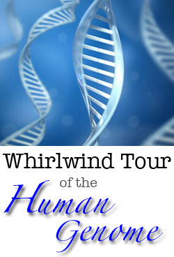whirlwind tour of the human genome