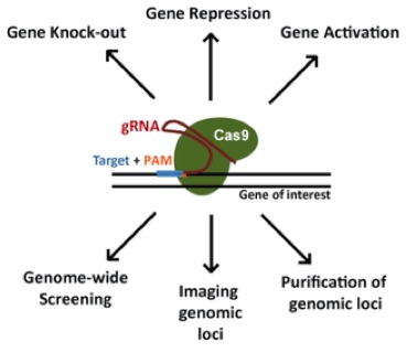 CRISPR Cas9 Tool