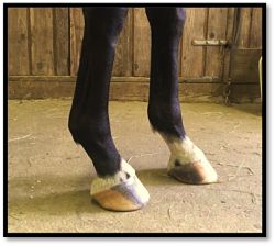 horse hoof injuries