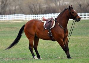closed reins horse
