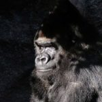 A Primer on Primates for SFF Writers