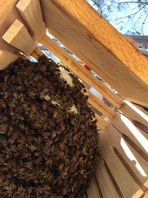 writing bees