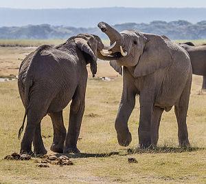 Animal Talk: The Emerging Science of Ethology