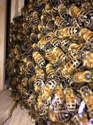 writing bees hive