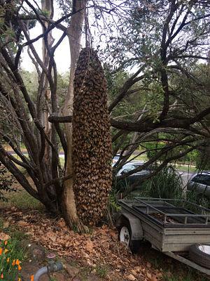 writing bees swarm