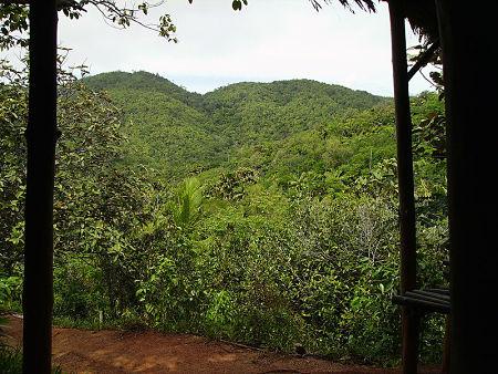 Valleé-de-mai forest