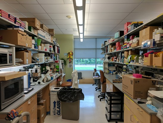 lab bench view