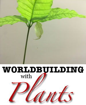Plants in World-building: Cacao Case Study