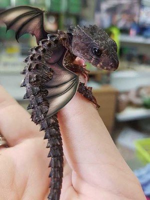 domesticated baby dragon