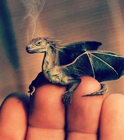 tiny pet dragon