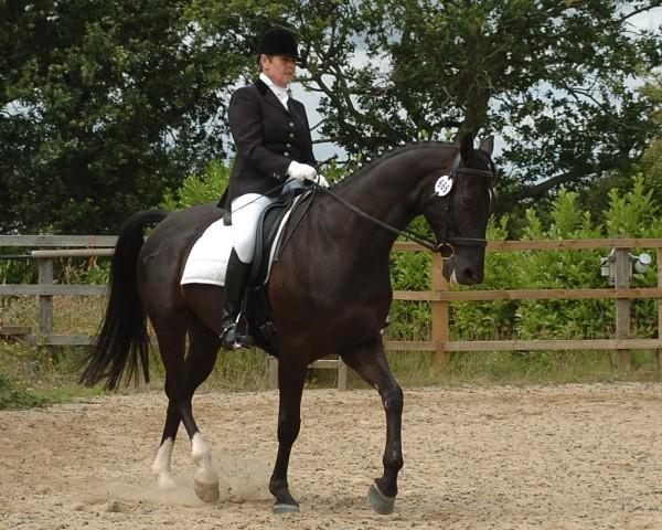 Writing Realistic Horses: Horse Psychology 101