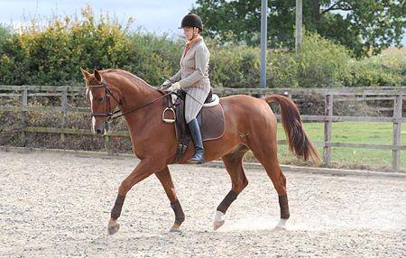 Horse realistic no stirrups