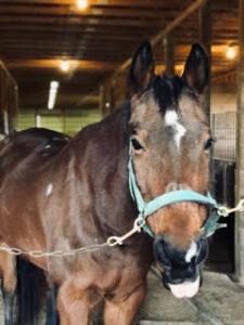 Jesse sassy horse